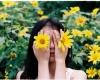 Tam Đảo mùa thu có hoa dã quỳ nở rộ